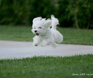animals, dogs, and Flying image