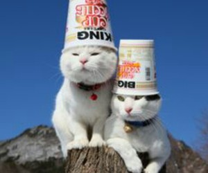 cat, chinese food, and funny image