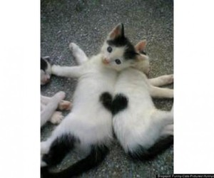 cats, felines, and heart image