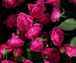 flowers, romance, and roses image