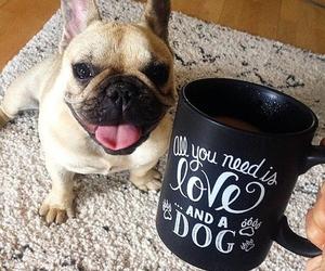 black, coffee, and dog image
