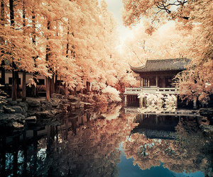 japan, nature, and tree image