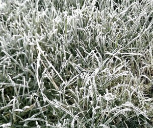 cold, out, and vegetation image