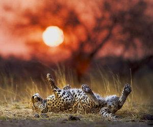 animal, amazing, and beautiful image