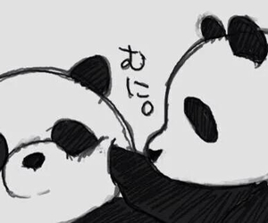 panda, kawaii, and animal image