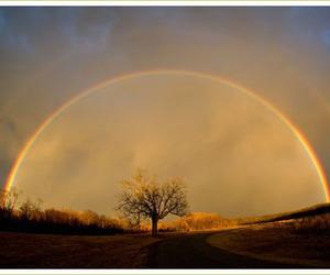 rainbow and tree image