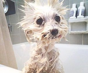 dog, cute, and bath image