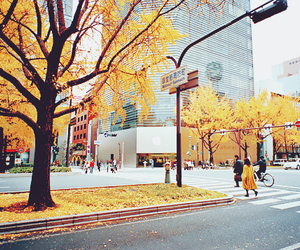 fall, street, and tree image