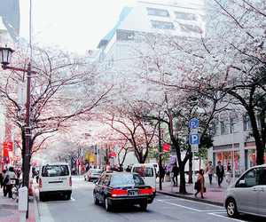 japan, beautiful, and tree image