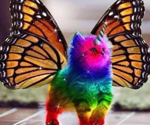 butterfly, cat, and colorful image