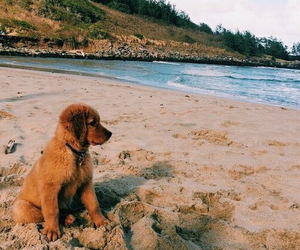 beach, dog, and summer image