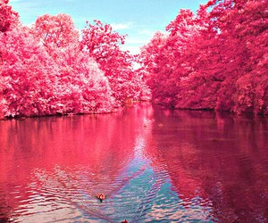 pink, nature, and tree image