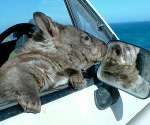 check, surf, and wombat image
