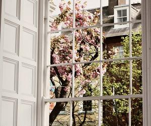 window, flowers, and tree image