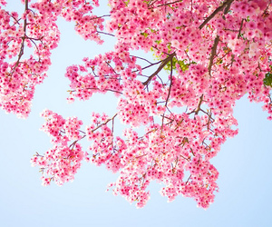 flowers, cherry, and nature image