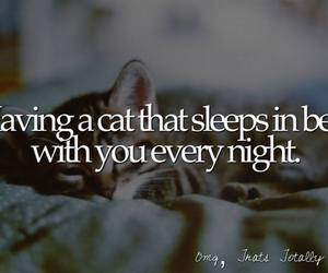 bed, cat, and night image