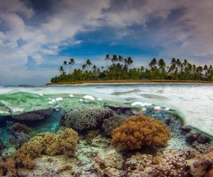 art, nature, and indonesië image