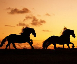 horse, sunset, and equine image