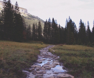 nature, forest, and hipster image
