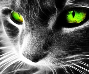 black, cat, and green eyes image
