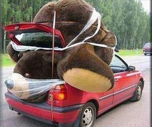 bear, love, and car image
