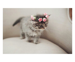 cute, cat, and flowers image