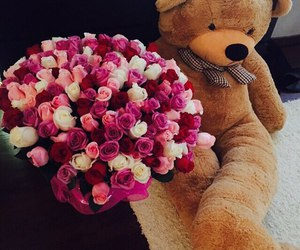 flowers, rose, and bear image