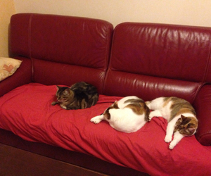 red, cats, and sleeping image