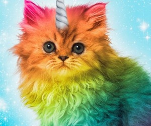 cat, colorful, and cute image