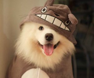 dog and totoro image