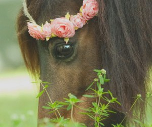 horse, beautiful, and animal image