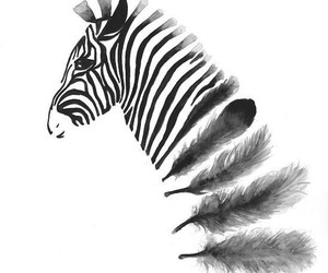 zebra, art, and black image