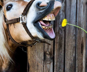 horse and flower image