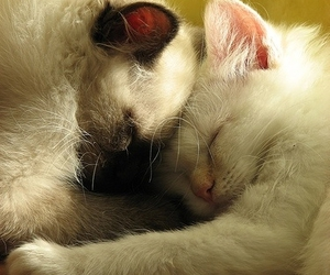 cute, love, and cat image