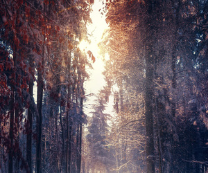 beautiful, nature, and forest image