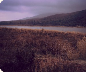 california, forest, and lake image