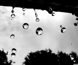 black and white and raindrops image