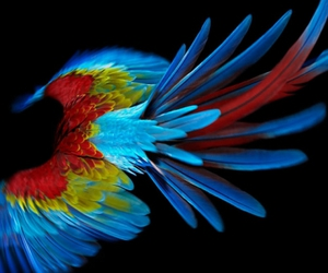 bird, parrot, and color image