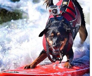 dog, extreme, and ocean image