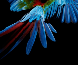 parrot and colorful image