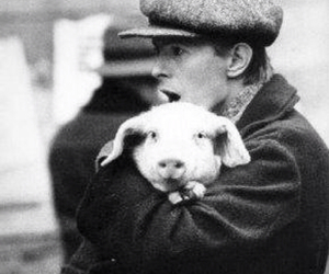 pig and david bowie image