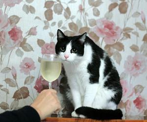 cat and wine image