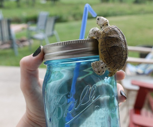 turtle, animal, and drink image
