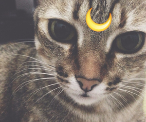 cat, funny, and grunge image