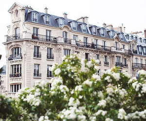 flowers, paris, and house image
