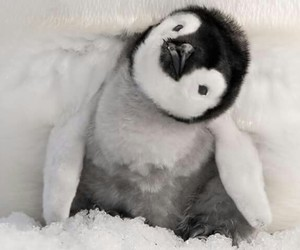 penguin, animal, and cute image
