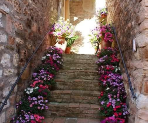 flowers, summer, and stairs image