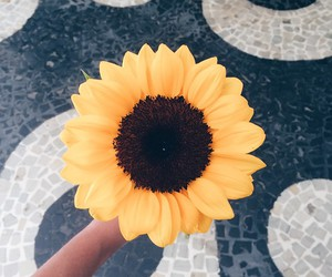 beautiful, photographs, and sunflower image