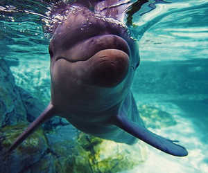 dolphin, life, and ocean image