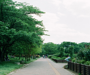 fujifilm, green, and nature image